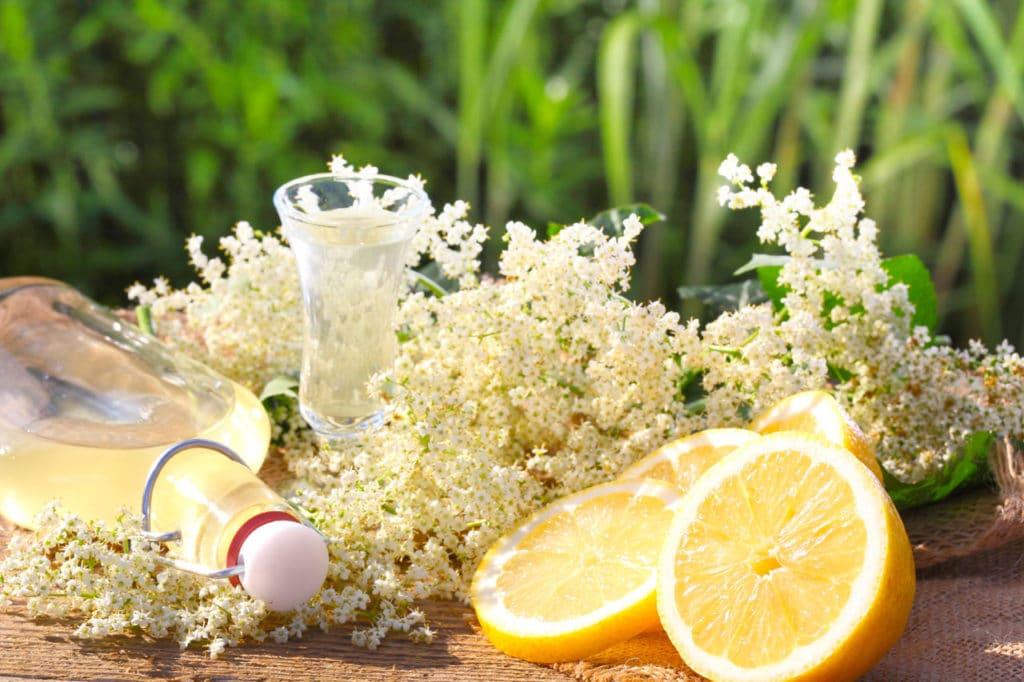 Hollunderblüten und eine aufgeschnittene Zitrone auf einem Tisch